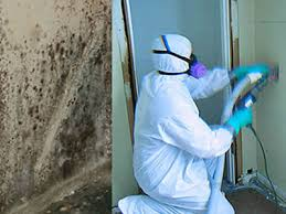 Mould Damage Removal